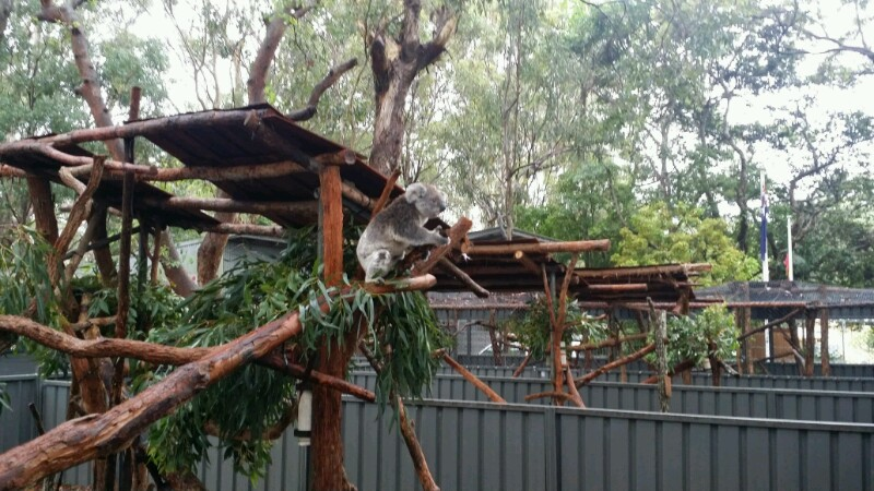 Valla Beach-Port Macquarie: von spielenden Senioren und kranken Koalas